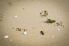 Pasikonik na plaży Obraz Stock