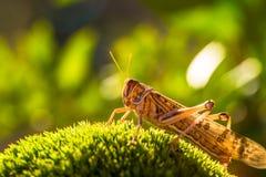 Pasikonik na trawie zdjęcie royalty free