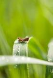 Pasikonik na trawy ostrzu Zdjęcia Royalty Free