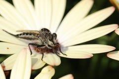 Pasikonik w kwiatu ogródzie Pozuje Dla Ja obraz stock