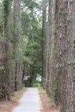 Pasillo de árboles Foto de archivo libre de regalías