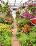 Pasillo de centro de jardinería Foto de archivo libre de regalías