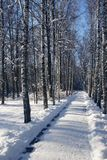 Pasillo de la nieve en un parque del invierno   Foto de archivo libre de regalías