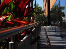 Pasillo de plantas, hall de entrada al centro comercial Imagen de archivo libre de regalías
