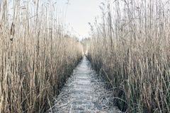 Pasillo de Reed Imagen de archivo