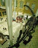 Pasillo del museo de la historia natural de Fernbank Fotografía de archivo libre de regalías