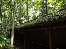 Pasillo en bosque Foto de archivo