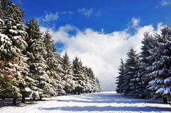 Pasillo en la nieve Fotos de archivo