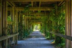 Pasillo verde Foto de archivo libre de regalías