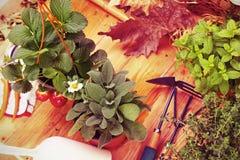 Pasja dla uprawiać ogródek Fotografia Royalty Free