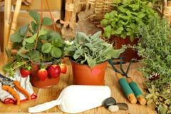 Pasja dla uprawiać ogródek -2 zdjęcie stock