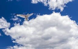 Pasjansu Latający Seagull zdjęcia royalty free