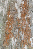 Płaska drzewnej barkentyny tekstura Obraz Royalty Free