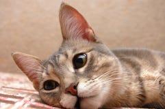 paskująca odpoczynkowa kot kanapa zdjęcie royalty free