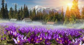 Pasma górskie Ukraina Zdjęcie Royalty Free