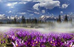 Pasma górskie Ukraina Zdjęcia Royalty Free