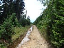 Pasmo górskie Marmaros Ukraińscy Carpathians blisko miasteczka Rakhiv Transcarpathian region Ukraina 08 Fotografia Stock