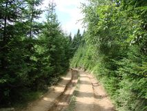 Pasmo górskie Marmaros Ukraińscy Carpathians blisko miasteczka Rakhiv Transcarpathian region Ukraina 08 Zdjęcie Stock