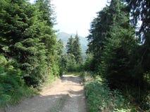 Pasmo górskie Marmaros Ukraińscy Carpathians blisko miasteczka Rakhiv Transcarpathian region Ukraina 08 Obrazy Stock