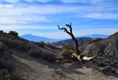 Pasmo Górskie z nieżywym drzewem w Joshua drzewa parka narodowego pustyni Zdjęcie Royalty Free
