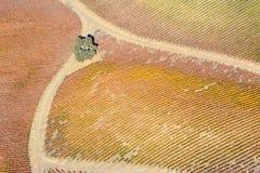 Paso罗夫莱斯从飞机观看的秋天葡萄园-惊人的秋天颜色 图库摄影