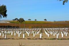 Paso罗夫莱斯有橡树和惊人的秋天颜色的秋天葡萄园 免版税库存图片