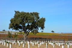 Paso罗夫莱斯有橡树和惊人的秋天颜色的秋天葡萄园 免版税图库摄影