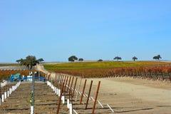 Paso罗夫莱斯有橡树和惊人的秋天颜色的秋天葡萄园 库存图片