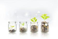 Paso cada vez mayor de la planta del dinero con la moneda del depósito, semilla en botella clara en el fondo blanco inversi?n fotos de archivo libres de regalías