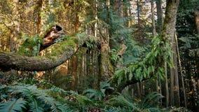 Paso de árboles viejos nudosos en bosque de la puesta del sol metrajes