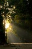Paso de la luz del sol a través del bosque Fotografía de archivo