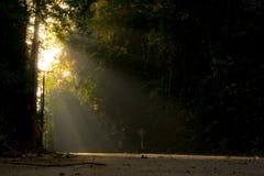 Paso de la luz del sol a través del bosque Imagen de archivo