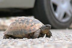 Paso de la tortuga en Turquía meridional Imágenes de archivo libres de regalías