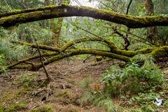 Paso de maderas Imagen de archivo libre de regalías