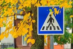 Paso de peatones de la señal de tráfico en las hojas amarillas Foto de archivo libre de regalías