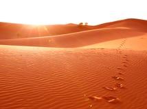 Paso de progresión en arena del desierto Imagen de archivo libre de regalías