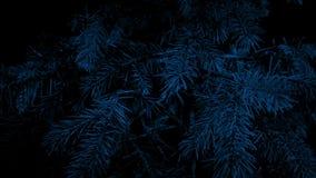Paso del árbol de pino en el primer de la noche almacen de video