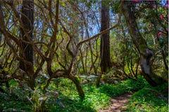Paso del bosque Fotos de archivo libres de regalías