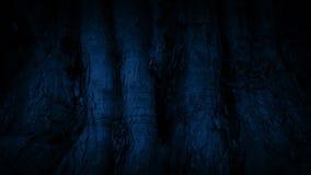 Paso del tronco de árbol viejo enorme en la noche almacen de video