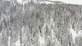 Paso elevado aéreo tirado de los árboles forestales de la picea y del pino del invierno cubiertos con nieve, metrajes