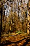 Paso en el bosque misterioso Imágenes de archivo libres de regalías