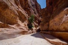 Paso en el Petra Fotos de archivo libres de regalías