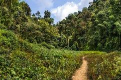 Paso en la selva Imagen de archivo libre de regalías