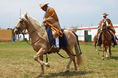 Paso Horse and Rider Royalty Free Stock Images