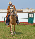 Paso Horse and Rider Stock Image