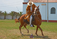 Paso Horse and Rider Stock Photography