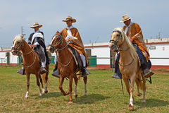 Paso Horses and Riders Royalty Free Stock Photography