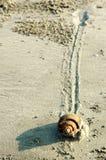 Paso lento del caracol en la arena imagenes de archivo