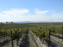 Paso Robles Vineyard Stock Images