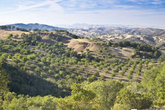 Paso Robles Wine Country Vista. View of the rolling hils of Paso Robles famous wine country in California Stock Images